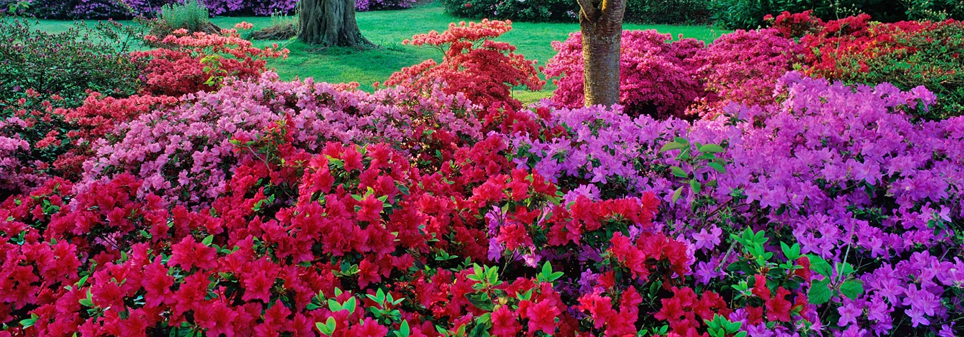 Image: Exbury Gardens, Copyright Colin Roberts